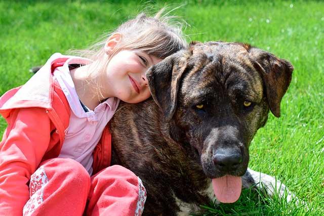 terapia asistida con animales-blog un pedacito de psicología