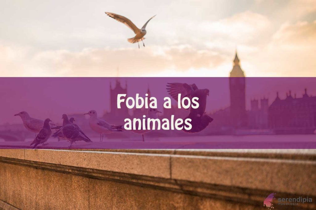 fobia-animales-blog