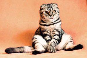beneficios-tener-gatos