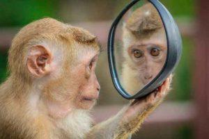 mente-mono-pensamientos